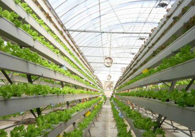 Yeni Tarım Teknolojileri ile Seracılık